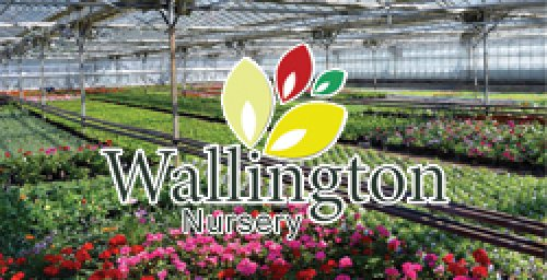 Wallington Nursery Ltd